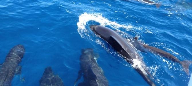 El mejor plan para tus vacaciones: alquilar un catamarán en Ibiza